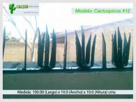 Cactuspicos12