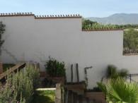 Cactuspicos 4-1