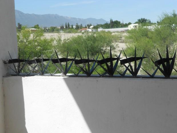 Cactuspicos 4-2