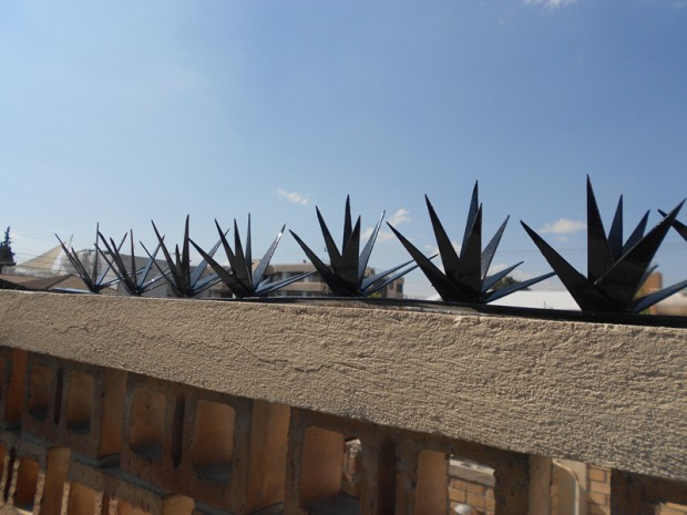 Cactuspicos 9