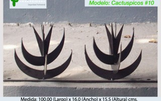Cactuspicos10