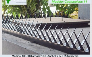 Cactuspicos1