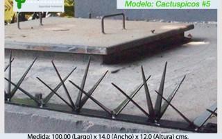Cactuspicos5