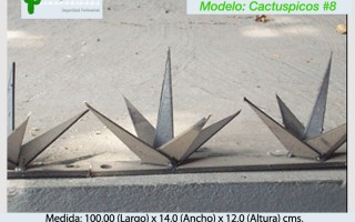 Cactuspicos8