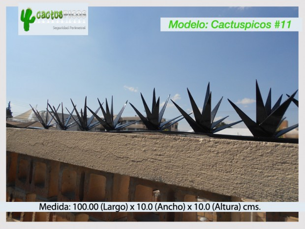 Cactuspicos11